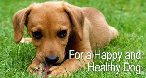 Dog Food for a Happy and Healthy Dog