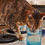 Preventing Behavioral Problems in Your Cat